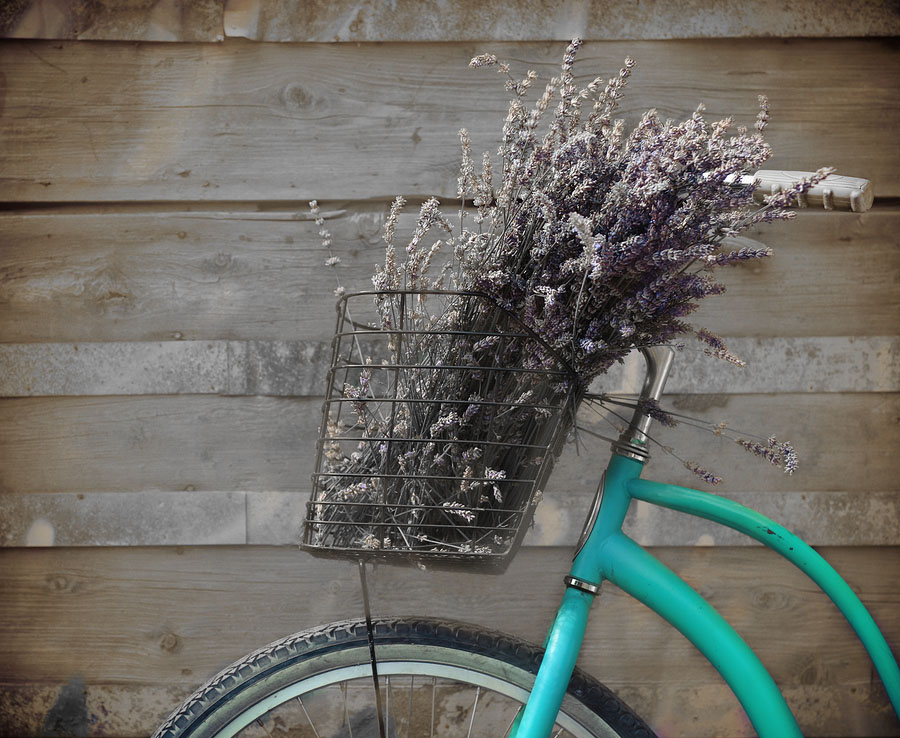 Bicykle with Basket